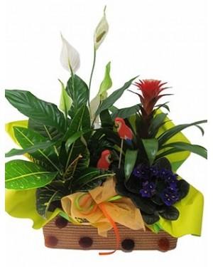 Composicion plantas
